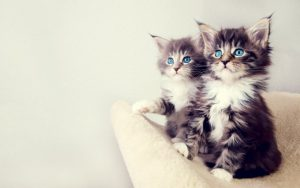 4361_two-little-cats-the-most-beautiful-eyes